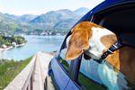 10 najdziwniejszych przepisów ruchu drogowego na świecie