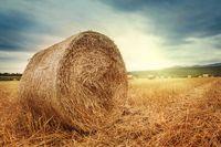 Zasiłek chorobowy po ustaniu zatrudnienia a gospodarstwo rolne