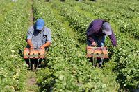 Praca w rolnictwie