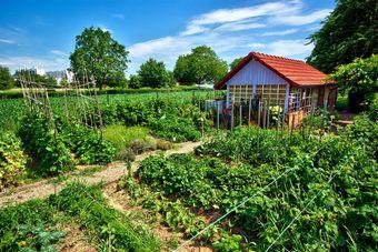 Dzierżawa gruntu pod ogródki działkowe zwolniona z VAT