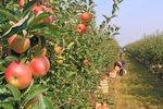 Pomocnik rolnika: nowa umowa, składki na ubezpieczenie i podatek PIT