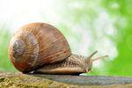 Hodowla ślimaków poza podatkiem dochodowym?