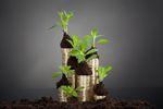 Fundusze inwestycyjne: zalety i wady