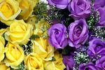 Kasy fiskalne 2013: kwiaty sztuczne na paragonie wystarczą