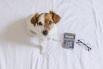 Idealne konto bankowe powinno być jak pies