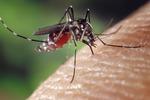 Czy preparaty na kleszcze i komary są dla nas bezpieczne?