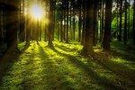 Kiedy podział nieruchomości rolnej i leśnej w trybie uproszczonym?