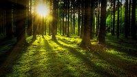 Kiedy podział nieruchomości leśnej w trybie uproszczonym?
