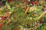 Ochrona środowiska: Polacy za mało zamożni na postawy proekologiczne?
