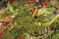 Polacy wyrzucają żywność