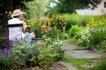 Ogródki działkowe: ich liczba wciąż spada