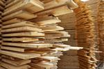 Kiedy zakup drewna od ludności bez podatku PCC?