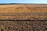 Dzierżawa gruntów rolnych w podatku VAT i dochodowych