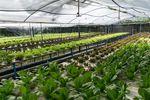 W rolnictwie będzie podatek dochodowy jak od działalności gospodarczej