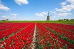 Praca za granicą: Holandia niepopularna?