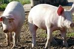GUS: ceny produktów rolnych o ponad 6% niższe niż rok temu