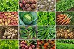 GUS: w maju kolejne obniżki cen produktów rolnych