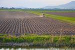 Sprzedaż ziemi rolnej zwolniona z podatku dochodowego?