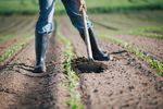 Rolnik ryczałtowy gdy zakup z odwrotnym obciążeniem w podatku VAT