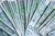 Subwencja finansowa PFR nie jest opodatkowana VAT