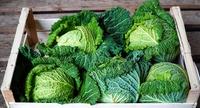 Jak powinna wyglądać umowa na dostawę produktów rolnych?