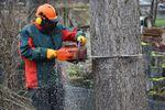 Wycinka drzew, czyli Lex Szyszko w praktyce