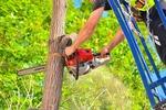 Jak uzyskać zgodę na wycinkę drzew z posesji?