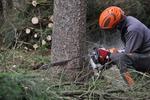 Wycinanie drzew - kiedy konieczne zgłoszenie lub zezwolenie?
