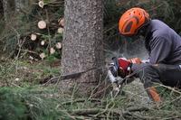 Kiedy usunięcie drzewa z nieruchomości trzeba zgłosić?