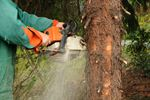 Wycinka drzew – jakie opłaty?