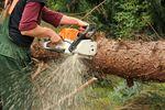 Wycinka drzew – kiedy musimy zdobyć na nią pozwolenie?