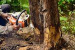 Wycinka drzew: niższe kary