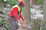 Kiedy potrzebne jest zezwolenie na wycięcie drzewa?